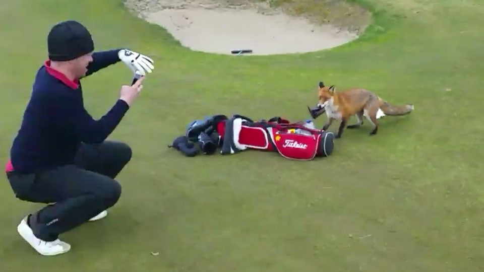 Fox-Steals-Wallet-Golf-Bag.jpg