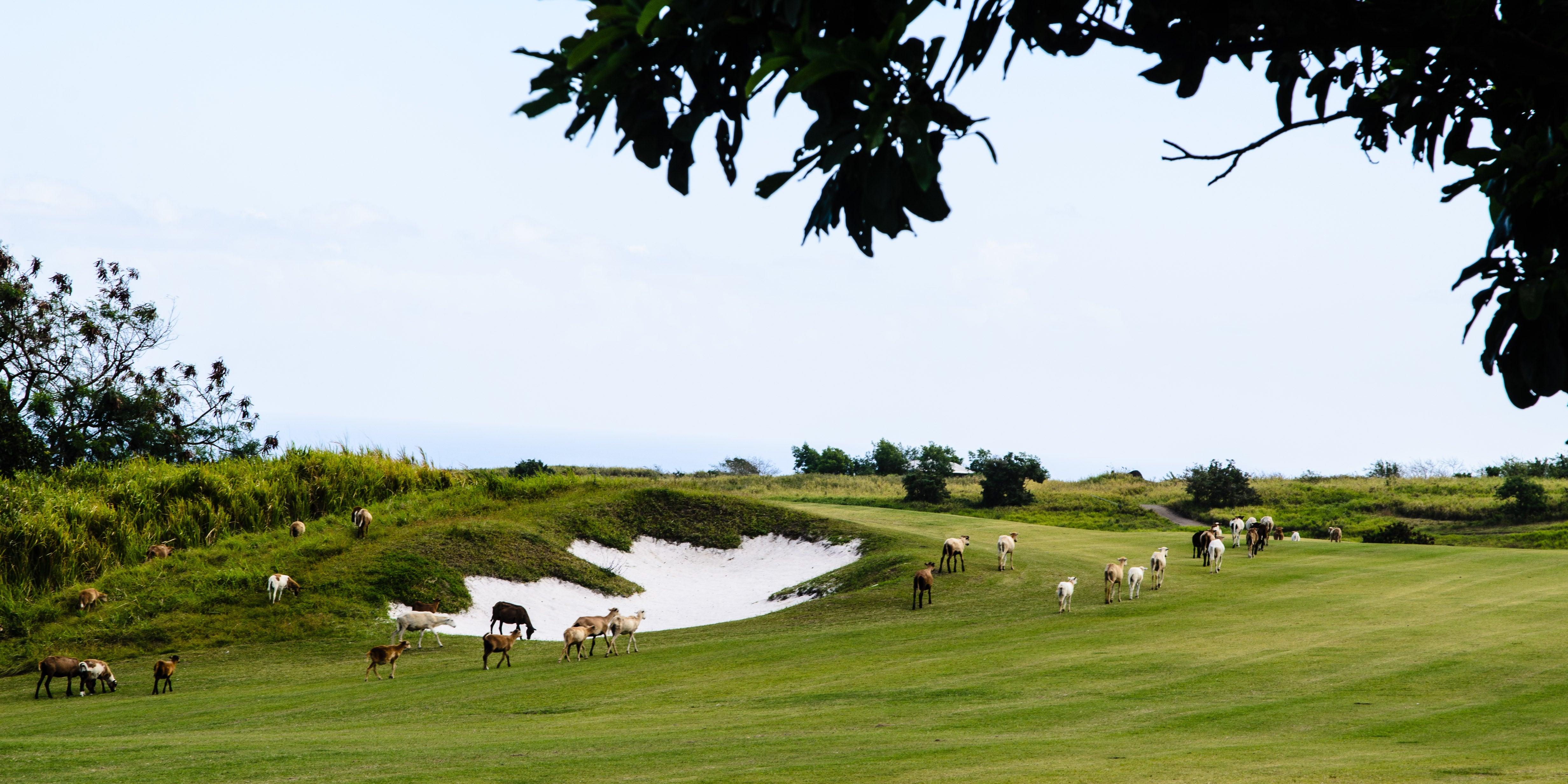 Golf_094e0dd5ee_o.jpg