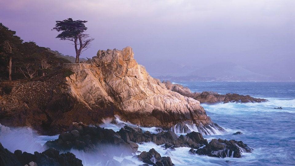 lone-cypress-pebble.jpg
