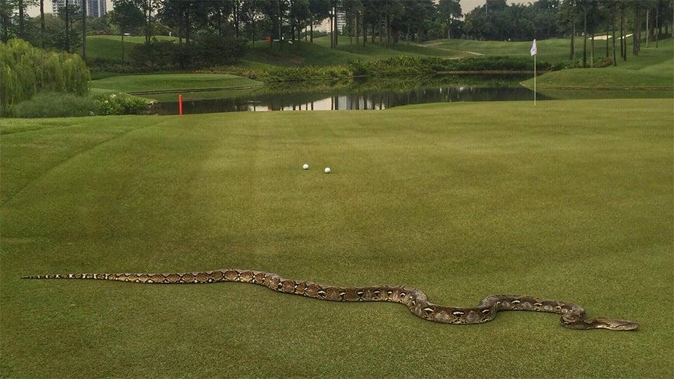 python cimb.jpg