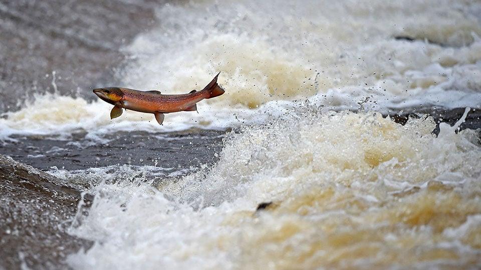 scotland-salmon.jpg