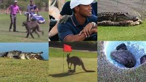 wild-animals-golf-main_960.jpg
