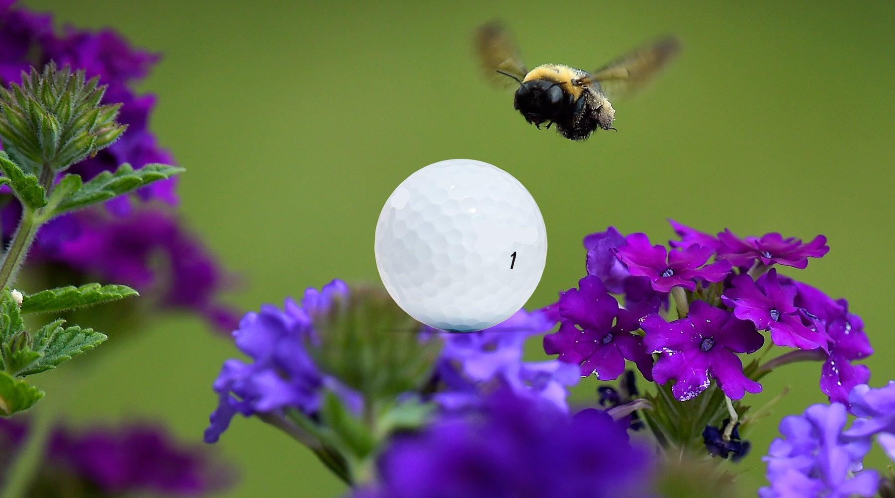 bees-golf.jpg