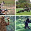t1-animal-attacks.jpg