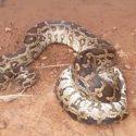 Snake golf course