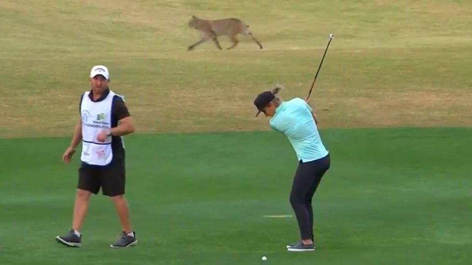 Wild bobcat runs passed LPGA pro Mel Reid at the Bank of Hope Founders Cup