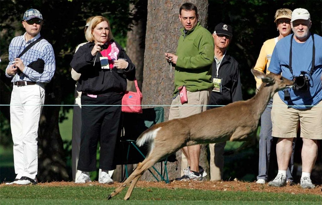 A deer crosses the 9th fairway on Wednesday of the 2011 Masters in Augusta, Ga.