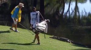 Caddie Kip Henley fights alligator RBC Heritage