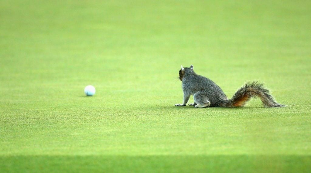 Golf ball nuts