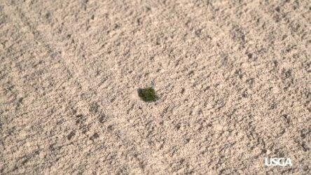 Grass in a bunker