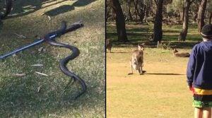 Venomous snake: Stuart Appleby encounters wildlife