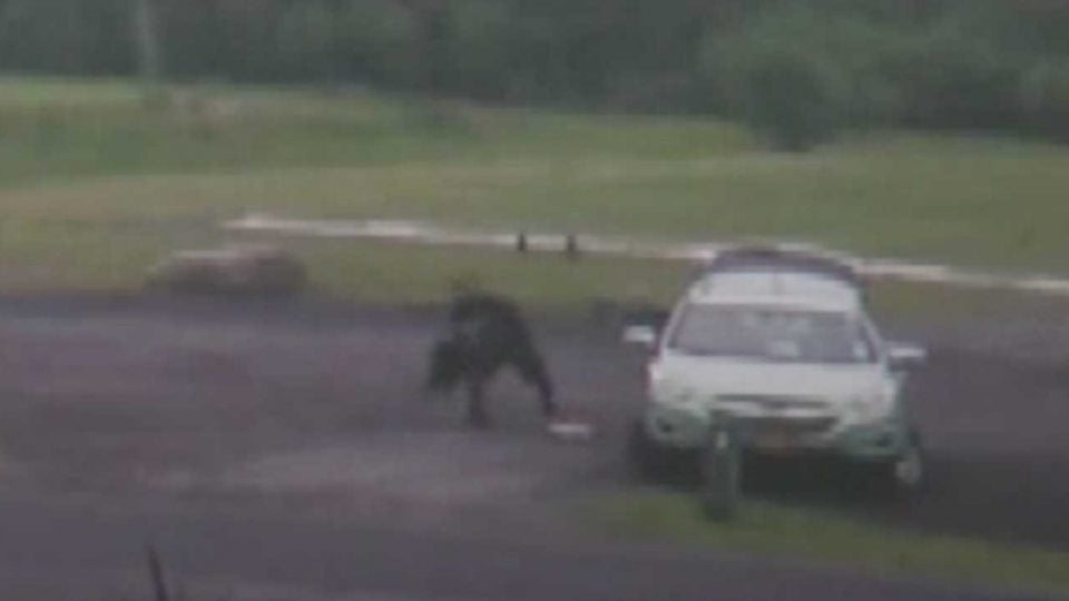 A person spotted by cameras taking a set of golf clubs from a parking lot on Tuesday.