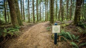 Bandon Dunes has more than golf. Walk this trail and find out.