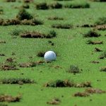 Golf ball and divots