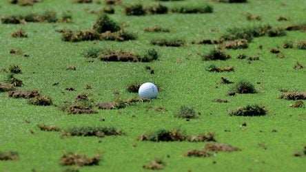 Golf ball and divots