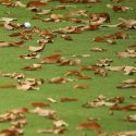 Leaves on the golf course.
