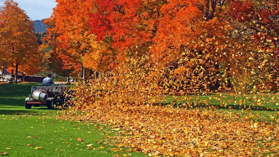 If you are playing fall golf in the leaves, know this key rule.