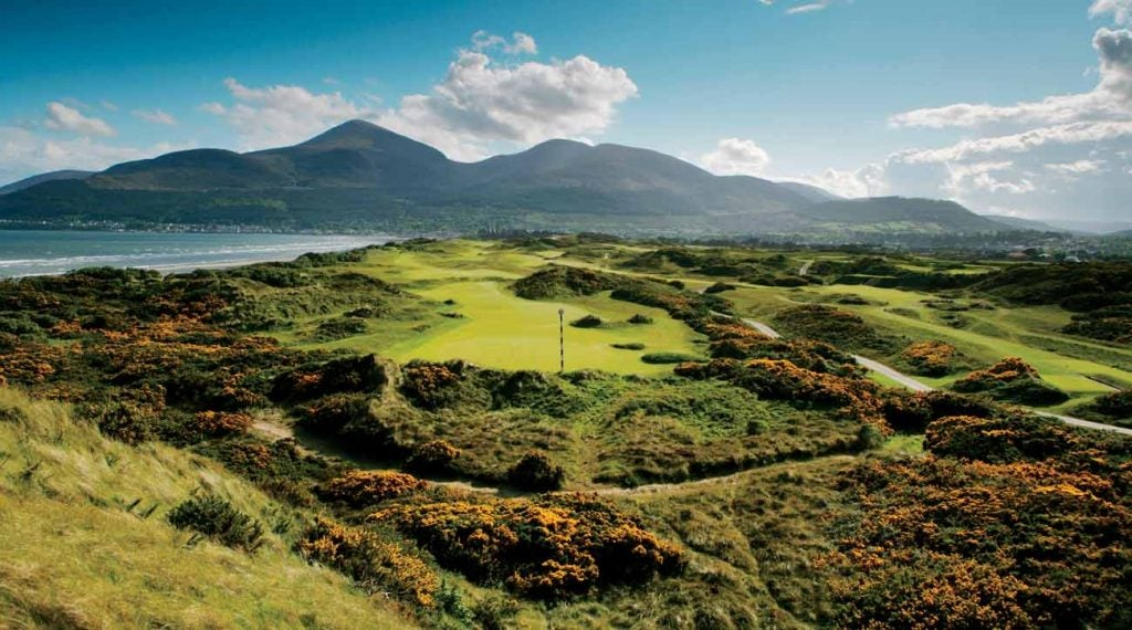 In the distance at Royal County Down are the town of Newcastle and the Mountains of Mourne. In front of you? Gorse gorgeousness.