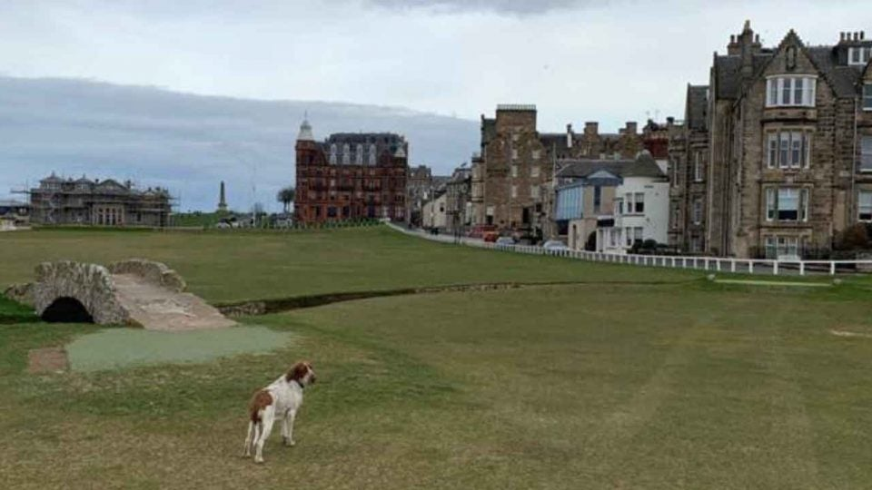 Victor Perez's dog at Old Course at St. Andrews