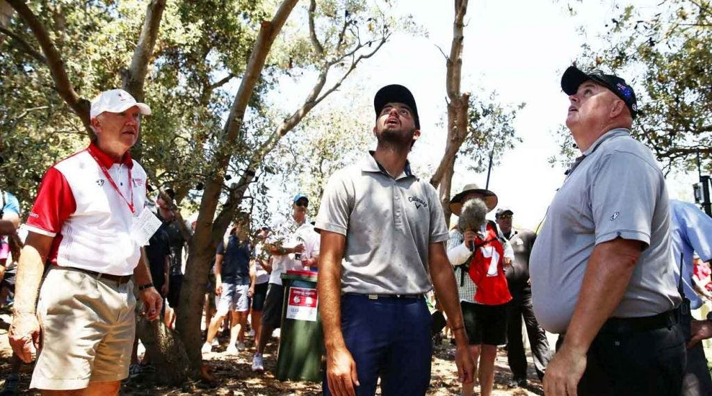 Golfers search for ball in a tree