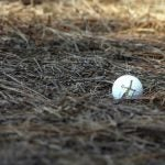 A golf ball in the trees.