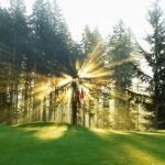 Sunrise through trees on golf green