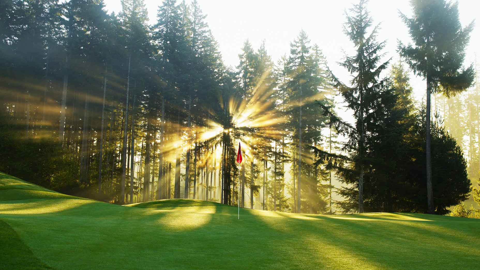 Sunrise through trees on golf green