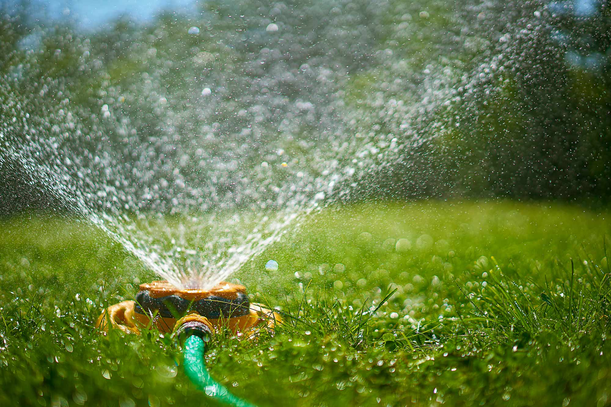 How much (and when!) to water your lawn, according to a golf-course superintendent