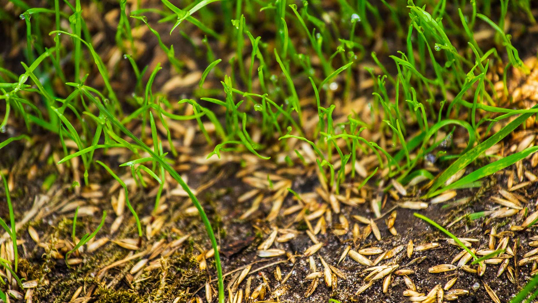 The best grass seed for your yard, according to a golf-course superintendent