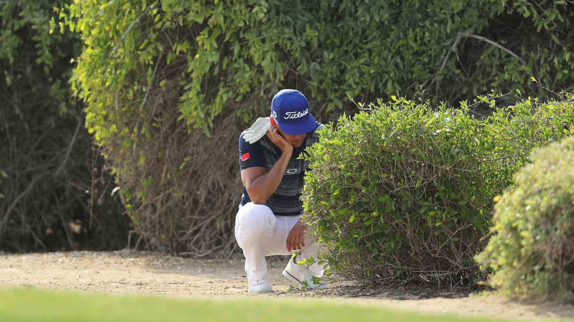 ball in bush