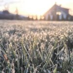 lawn covered with frost