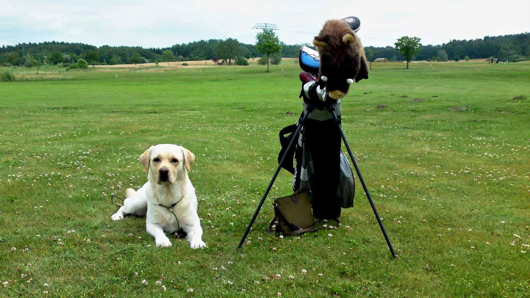 Golf with dog