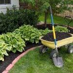 mulch in a yard