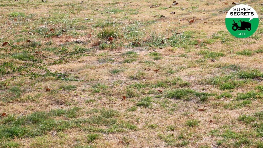 dry bad grass in a yard